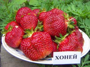(c) Berrystore.ru