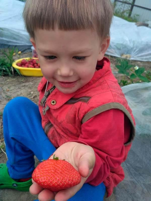 Лука с клубникой в руке
