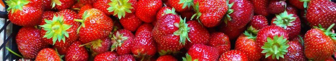 О клубничной ферме BerryStore.ru