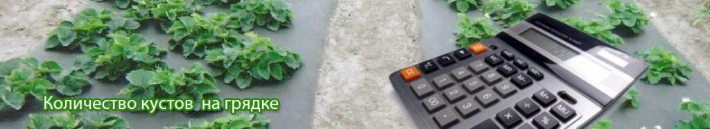Калькулятор расчета количества кустов клубники на грядке