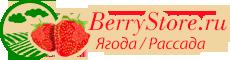 Клубничная ферма в Санкт-Петербурге Логотип
