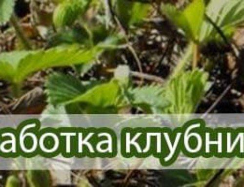 Весенняя профилактическая обработка клубники (земляники садовой)